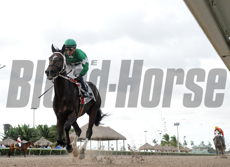Three Rules wins the Florida Sire In Reality Division<br /> Coglianese Photos/Leslie Martin