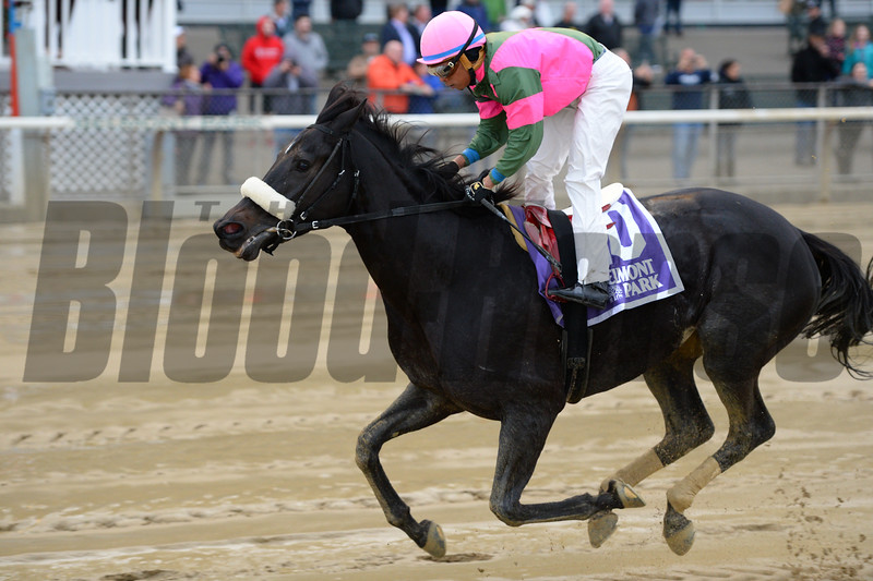 Old Harbor wins the 2016 Ticonderoga Stakes<br /> Coglianese Photos/Joe Labozzetta