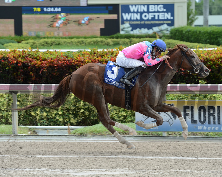 She's Incredible wins the 2016 Florida Sire Series - Meadow Star Stakes.<br /> Coglianese Photos/Leslie Martin