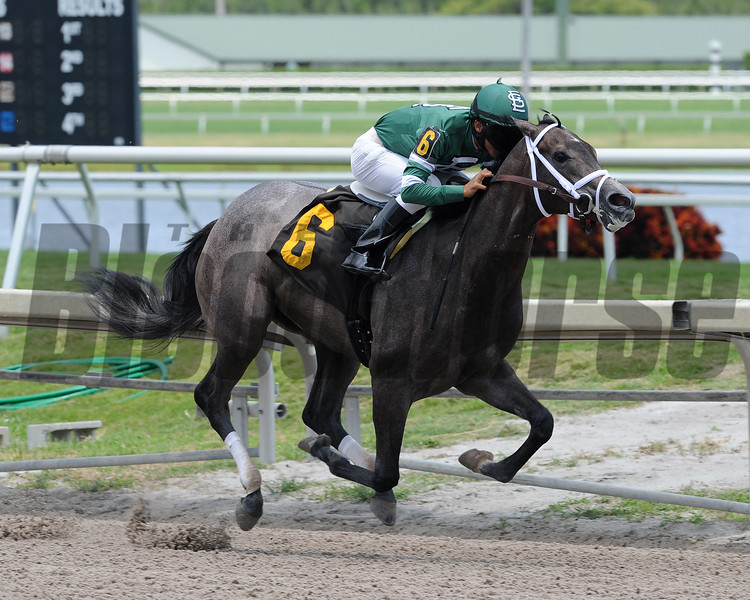 Bodes Dream wins a MSW at Gulfstream Park May 11, 2016 (Bode Meister's first winner)<br /> Coglianese Photos/Lauren King
