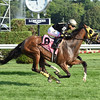 Free N Clear wins the 2016 New York Stallion Series Stakes.<br /> Coglianese Photos