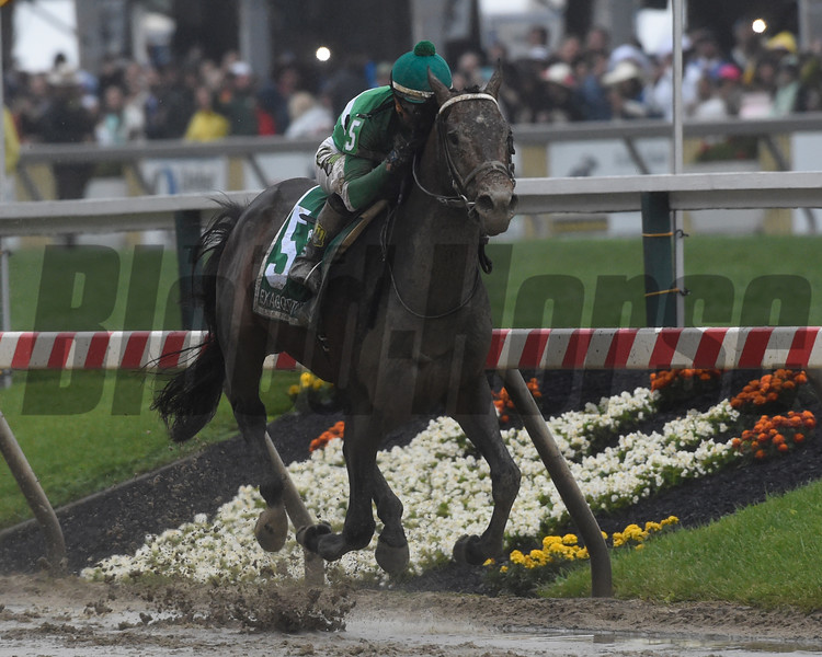 Exaggerator with jockey Kent Desormeaux wins the 141st runnoing of the Preakness Stakes.  Photo by Skip Dickstein