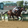 Comfort wins race 8 at Belmont Park May 29, 2016<br /> Coglianese Photos