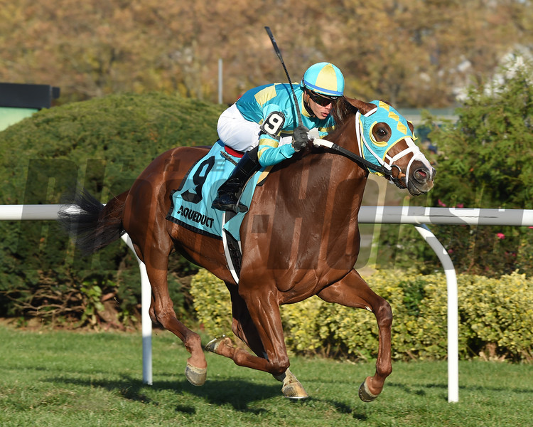 Bigger Picture wins the 2016 Red Smith<br /> Coglianese Photos/Chelsea Durand