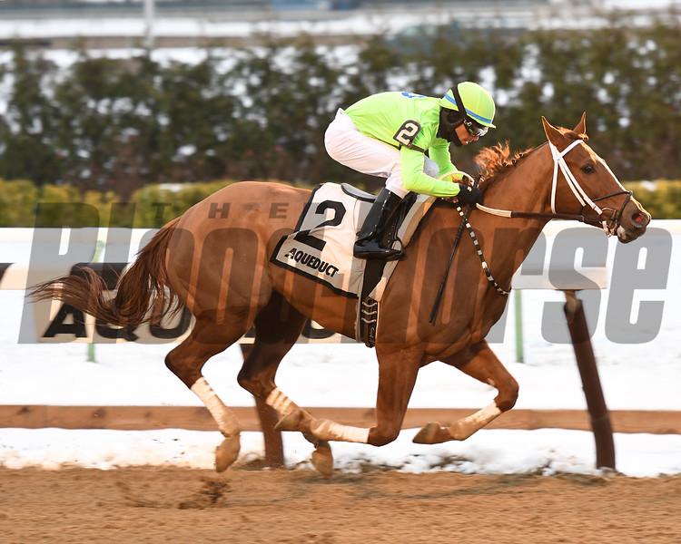 War Story wins the 2016 Queens County Stakes.<br /> Coglianese Photos/Susie Raisher