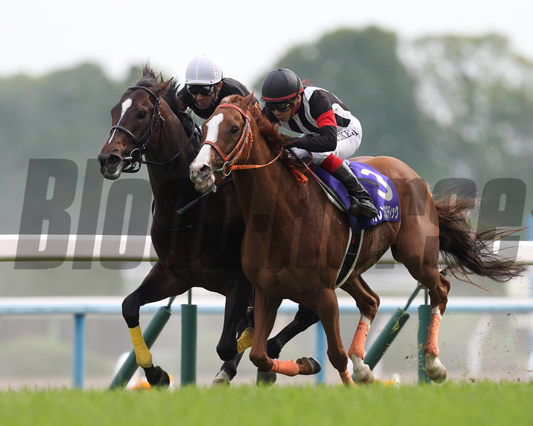 Kitasan Black; Tenno Sho (Spring); 2016; Japan; Yutaka Take jockey