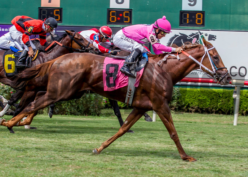 Calamity Jane wins the 2016 Louisiana Cup Distaff Stakes.<br /> Hodges Photography / Lou Hodges Jr.