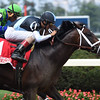 Comfort wins the 2016 Seattle Slew Stakes.<br /> Coglianese Photos/Chelsea Durand