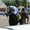 Dream of Me wins the 2016 Florida Sire Unbridled Stakes.<br /> Coglianese Photos/Kenny Martin