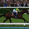 Satono Diamond wins the 2016 Kikuka Sho<br /> Naoji Inada