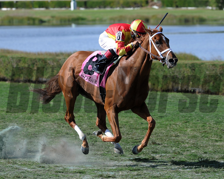 Isabella Sings wins the 2016 My Charmer<br /> Coglianese Photos/Lauren King
