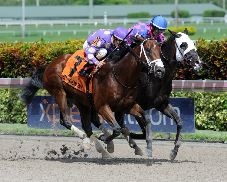 Awesome Banner wins the 2016 Florida Sire Series Foolish Pleasure Stakes<br /> Coglianese Photos/Lauren King