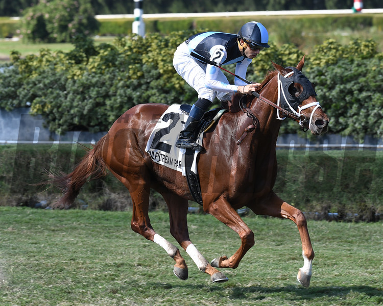 Squadron wins the 2016 Juvenile Turf Stakes<br /> Coglianese Photos/Lauren King