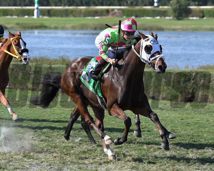 Enterprising wins the 2016 Millions Turf Preview Stakes<br /> Coglianese Photos/Lauren King