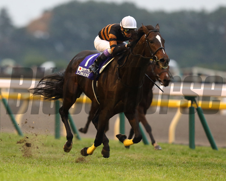 Kitasan Black wins the Japan Cup (gr. I) at Tokyo Racecourse on November 27, 2016. The horse is owned by a famous singer, Mr. Saburo Kitajima, and the winning jockey is another famous jockey, Mr. Yutaka Take. The horse is trained by Mr.Hisashi Shimizu.