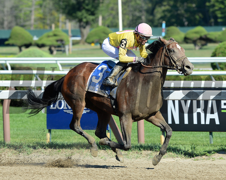 Wavell Avenue wins the 2016 Shine Again Stakes.<br /> Coglianese Photos/Joe Labozzetta