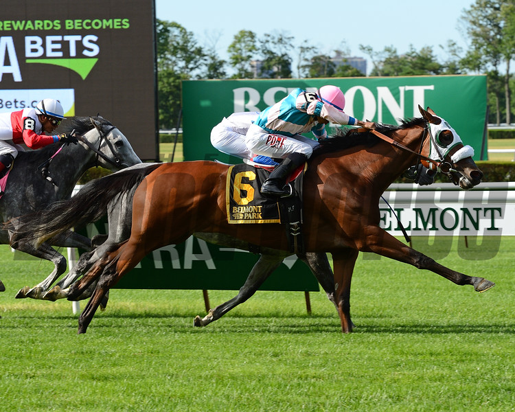 My Sweet Girl wins the 2016 Perfect Sting Stakes.<br /> Coglianese Photos/Joe Labozzetta
