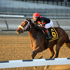 Paulassilverlining wins the 2016 Garland of Roses.<br /> Coglianese Photos/Joe Labozzetta