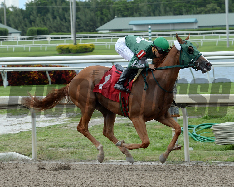 Draft Beer by Tapizar wins race 5 at Gulfstream Park May 26, 2016 <br /> Coglianese Photos/Leslie Martin