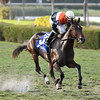 Compelled wins the 2016 Juvenile Filly Turf Stakes<br /> Coglianese Photos/Lauren King