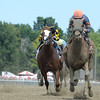 Mind Your Biscuits gets his first graded stakes win in the Amsterdam Stakes (gr. II) at Sratoga Race Course on July 30, 2016. Coglianese Photos.