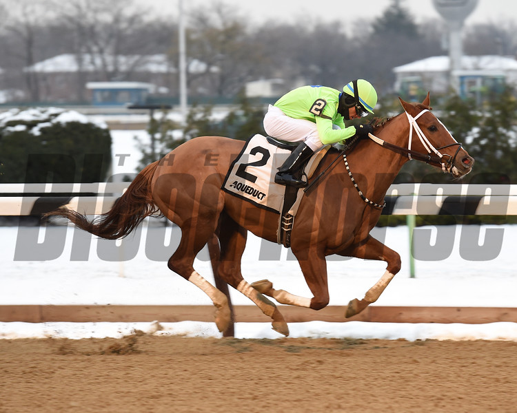 War Story wins the 2016 Queens County Stakes.<br /> Coglianese Photos/Chelsea Durand