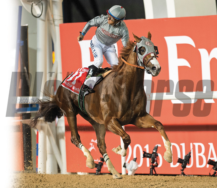 California Chrome and jockey Victor Espinoza win the Dubai World Cup at Meydan Racecourse on March 26, 2016. <br /> Photo by: Mathea Kelley/Dubai Racing Club