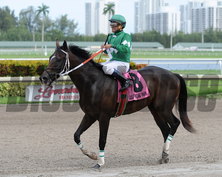 Three Rules wins the 2016 Dr. Fager division of the Florida Sire Stakes<br /> Coglianese Photos/Lauren King