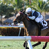 Faufiler captures the Sand Springs Stakes at Gulfstream Park.     <br /> Coglianese Photo