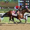 A. P. Indian wins the 2016 Forego Stakes.<br /> Coglianese Photos