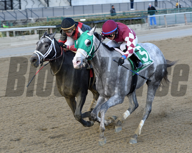 Even Thunder wins the 2016 King's Swan Stakes.<br /> Coglianese Photos/Chelsea Durand