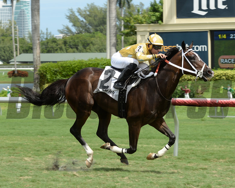 Diamond Bachelor wins the 2016 Mr. Steele Stakes.<br /> Coglianese Photos/Leslie Martin