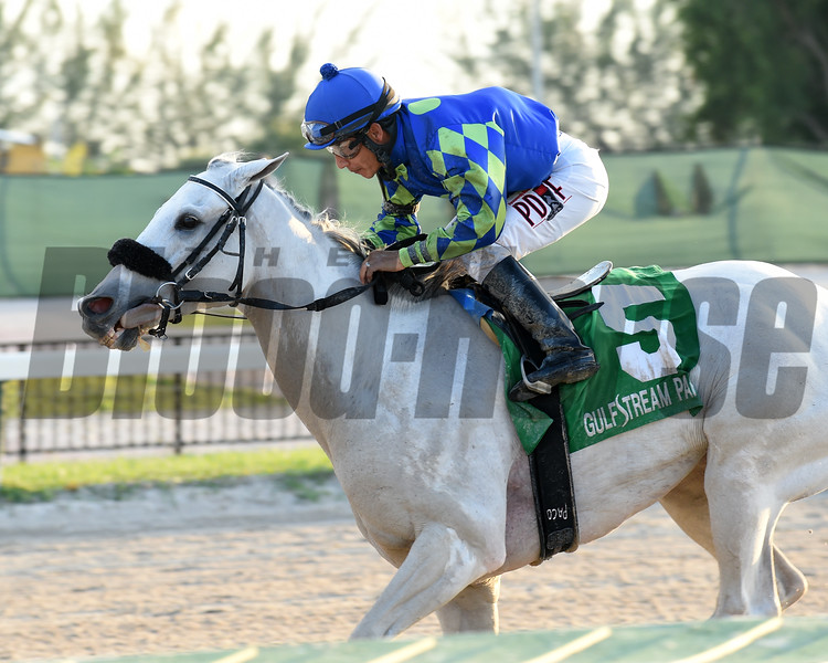 Mr. Jordan wins the 2016 Millions Classic Preview Stakes<br /> Coglianese Photos