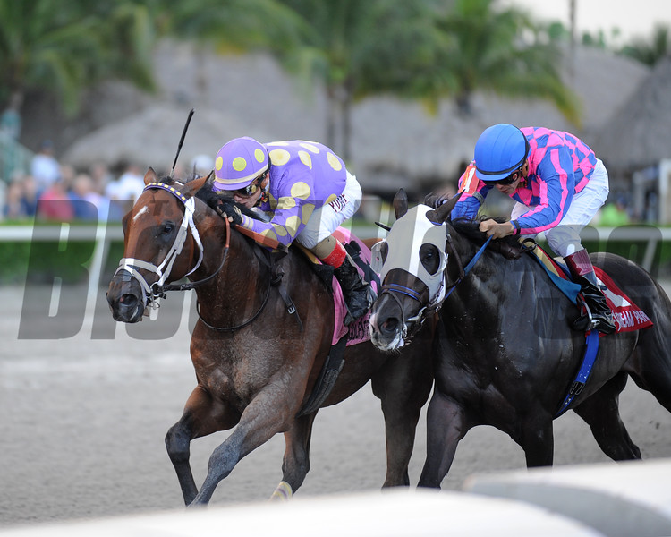 Awesome Banner wins the 2016 Florida Sire Series - Prized Division<br /> Coglianese Photos/Kenny Martin