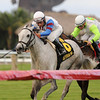 Neck of the Moon wins the 2016 South Beach Stakes<br /> Coglianese Photos/Kenny Martin