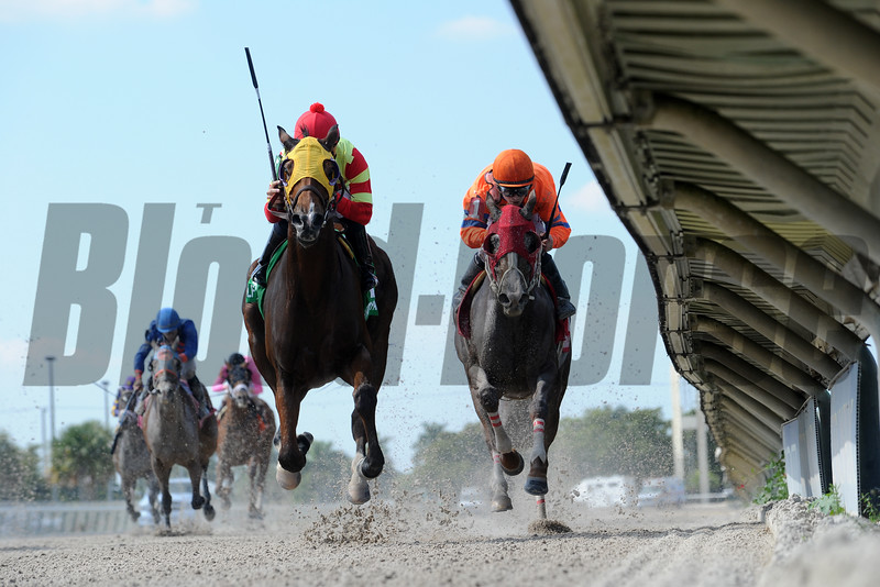 Moment of Delight with jockey Eddie Castro wins Race 2 $100,000 for the Million Distaff Preview at Gulfstream Park on Novermber 12, 2016.