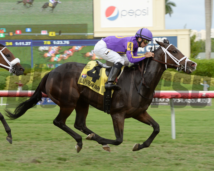 Josdesanimaux wins the 2016 Panama City Stakes<br /> Coglianese Photos/Leslie Martin