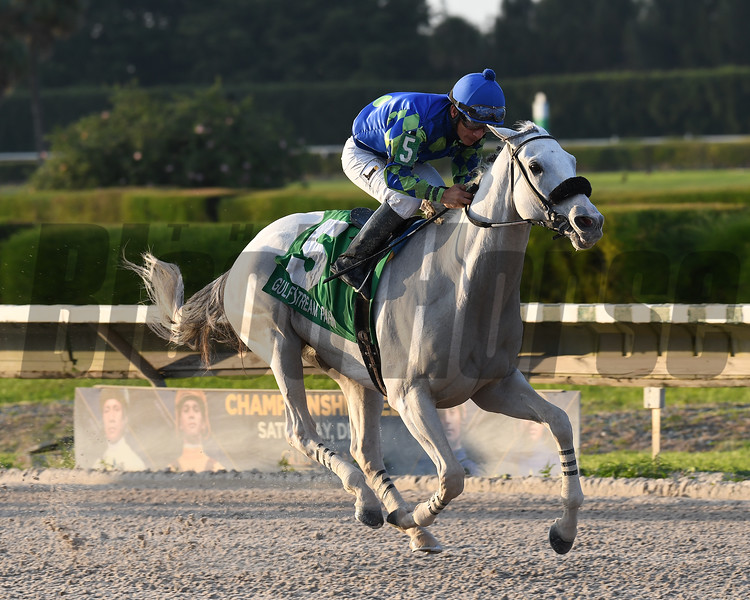 Mr. Jordan wins the 2016 Millions Classic Preview Stakes<br /> Coglianese Photos/Lauren King