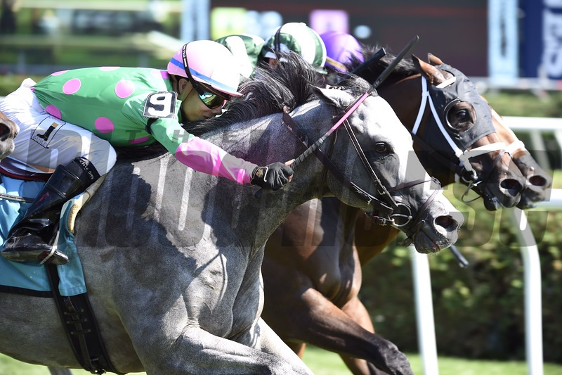 Disco Partner wins the 2016 Troy Stakes.<br /> Skip Dickstein Photo