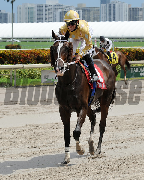 Diamond Bachelor wins the 2016 The Vid Stakes.<br /> Coglianese Photos/Lauren King