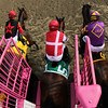 Go Maggie Go Starting Gate Remote Black-Eyed Susan Pimlico Chad B. Harmon