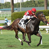 Celestine wins the 2016 Honey Fox Stakes. <br /> Coglianese Photos