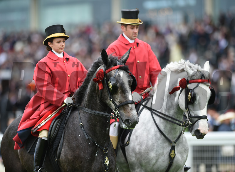 Queen's Horses at Royal Ascot