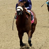 Taris Humana Distaff Churchill Downs Chad B. Harmon