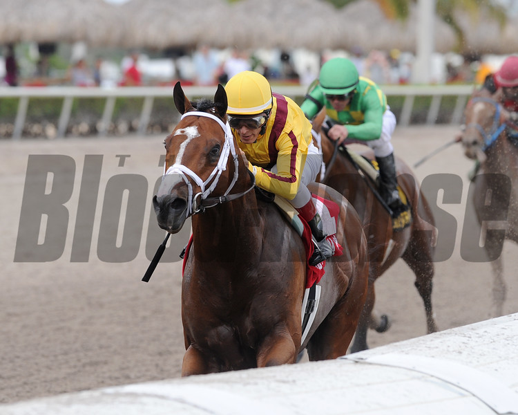 Stanford wins the 2016 Harlan's Holiday<br /> Coglianese Photos/Kenny Martin