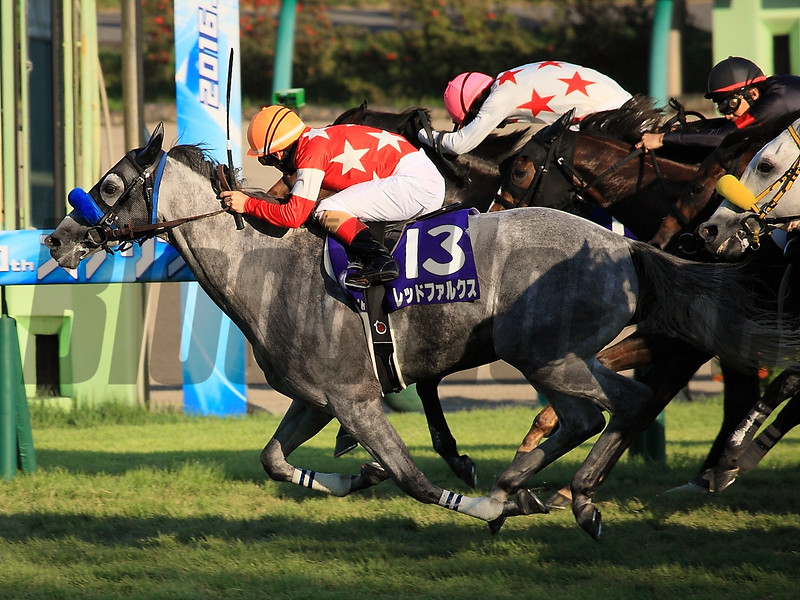 Red Falx wins the 2016 Sprinters Stakes<br /> Naoji Inada Photo