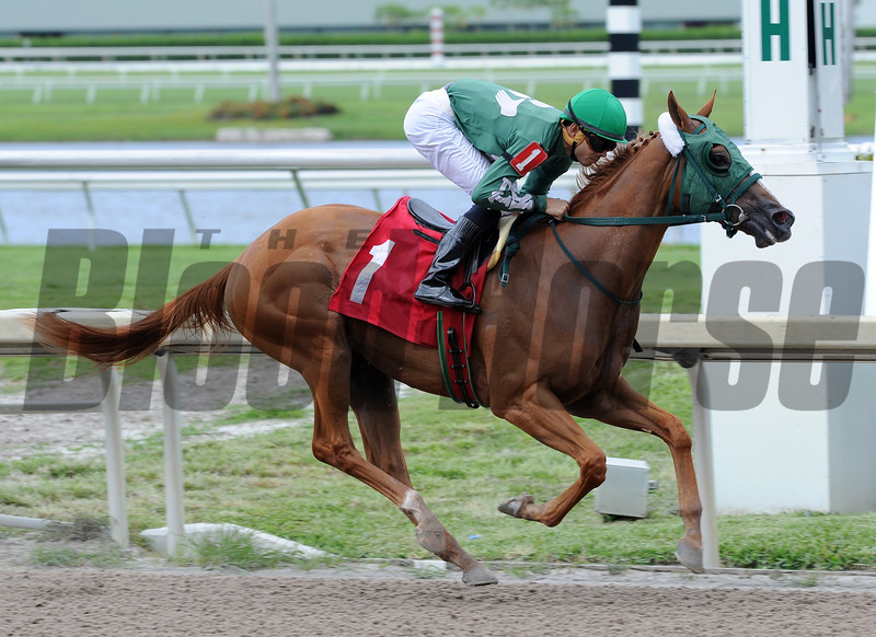 Draft Beer by Tapizar wins race 5 at Gulfstream Park May 26, 2016 <br /> Coglianese Photos/Lauren King