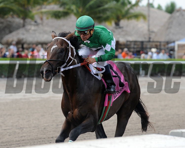 Three Rules wins the 2016 Dr. Fager division of the Florida Sire Stakes<br /> Coglianese Photos/Kenny Martin