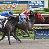 Tormenta de Oro wins the 2016 Claiming Crown Glass Slipper Stakes<br /> Coglianese Photos/Leslie Martin