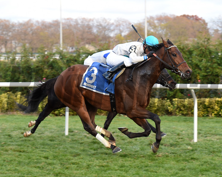 Macagone wins the 2016 Artie Schiller Stakes.<br /> Coglianese Photos